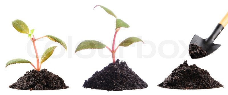 Two just planted plants and preparation of soil to landing for Preparation of soil wikipedia