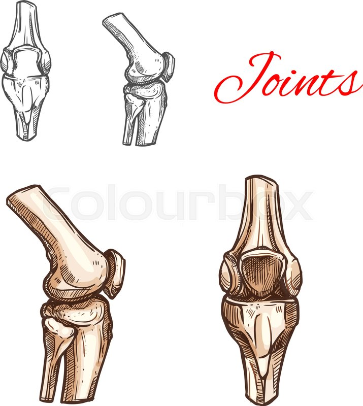 Human knee or elbow bones and joints vector sketch icon of body ...