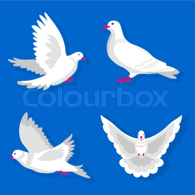 Pigeon Or Dove White Bird Flying With Spread Wings In Sky Or