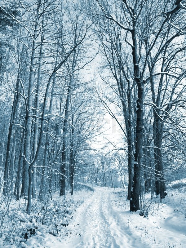 winter road to wood the trees covered with snow