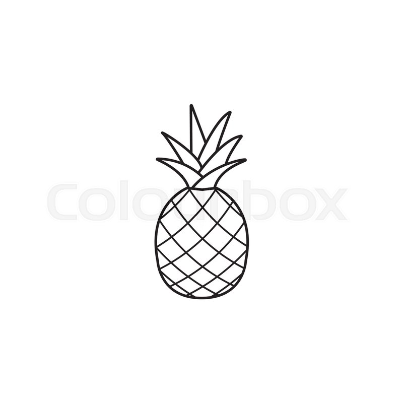Pineapple and ananas line icon, healthy fruit, vector graphics, a ...