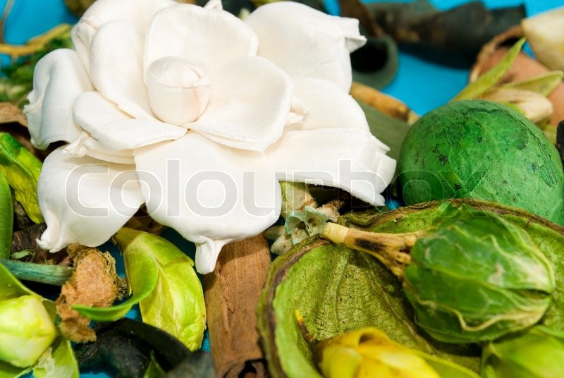 Beautiful gardenia flower and dried exotic leaves and flowers (as a tropical background), stock photo