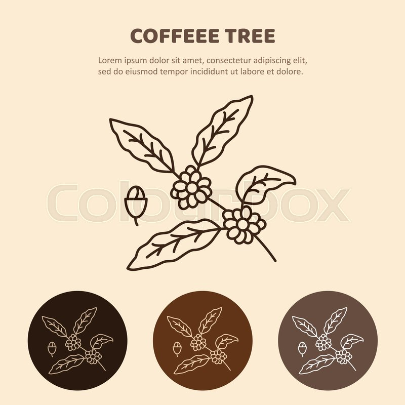 Coffee tree branch with beans. Coffee plant with leaf, berry, coffee ...