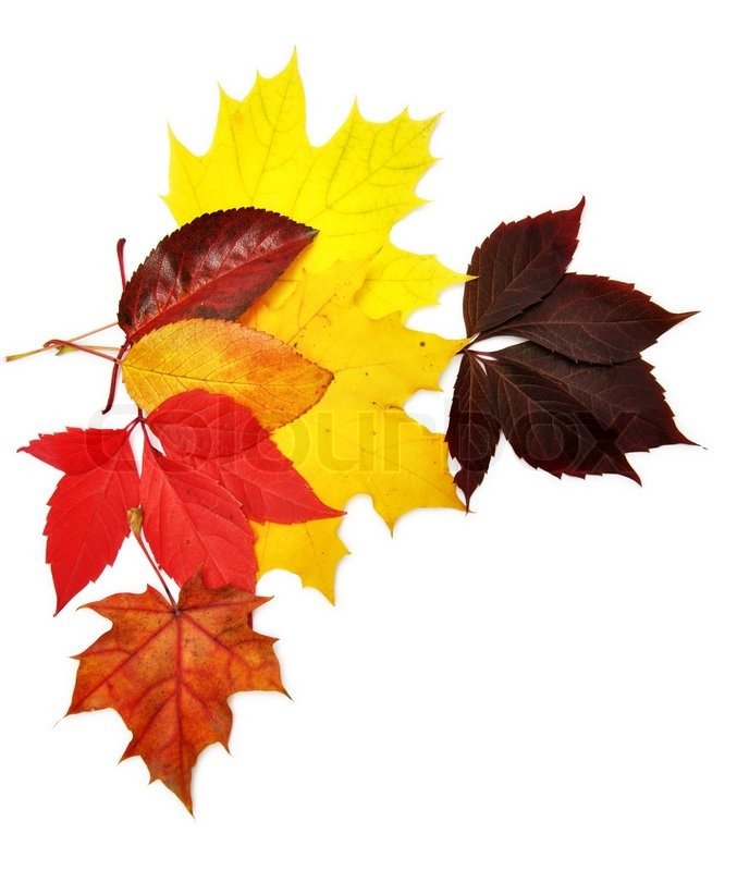 colorful autumn leaves over white background with clipping path stock photo colourbox happy thanksgiving clip art religious happy thanksgiving clip art free