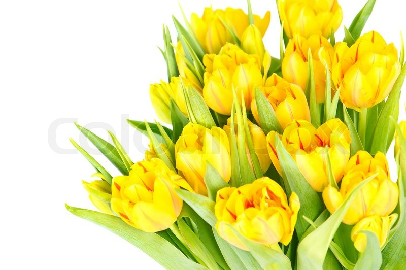 Bouquet of fresh yellow tulip flowers stock photo colourbox mightylinksfo