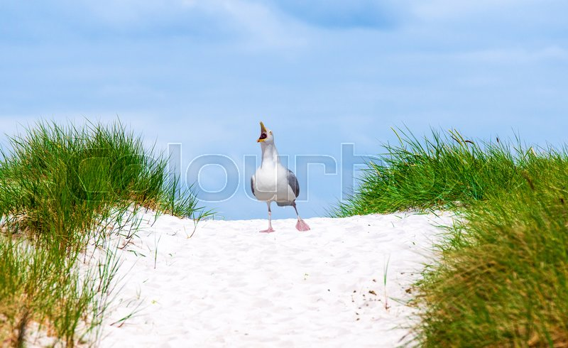 dune and seagull on baltic sea