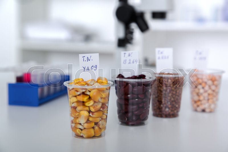 Chemical Laboratory of the Food supply . Food in laboratory, dna modify , stock photo