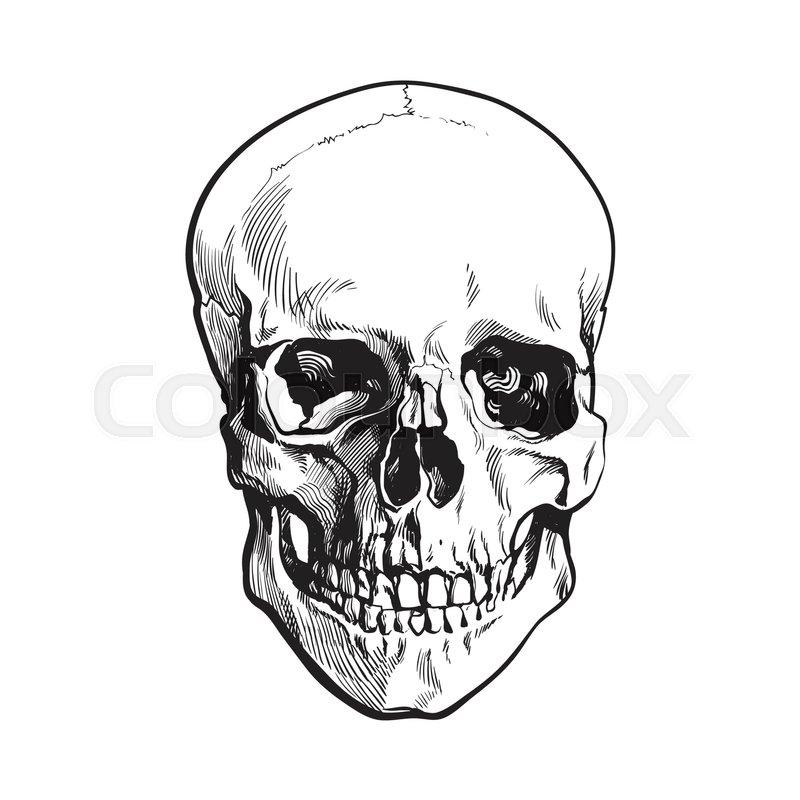 Hand Drawn Human Skull Anatomical