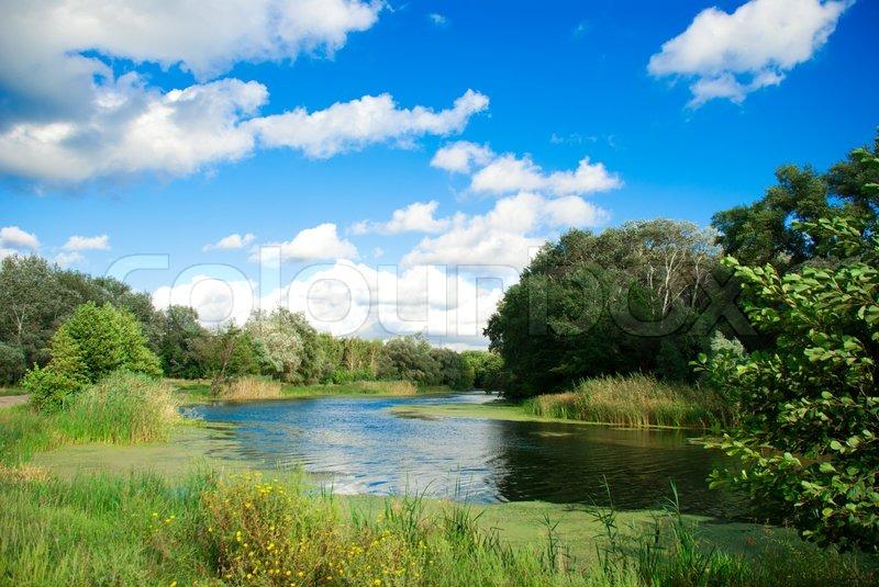 River beautiful vegetation jungle widescreen wallpaper 22373 picture