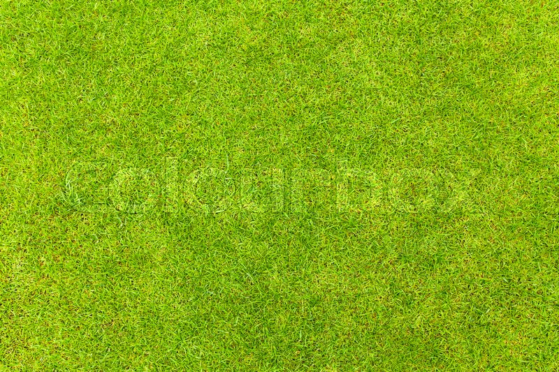 Top view of Natural green grass texture, Aerial view of park, stock photo