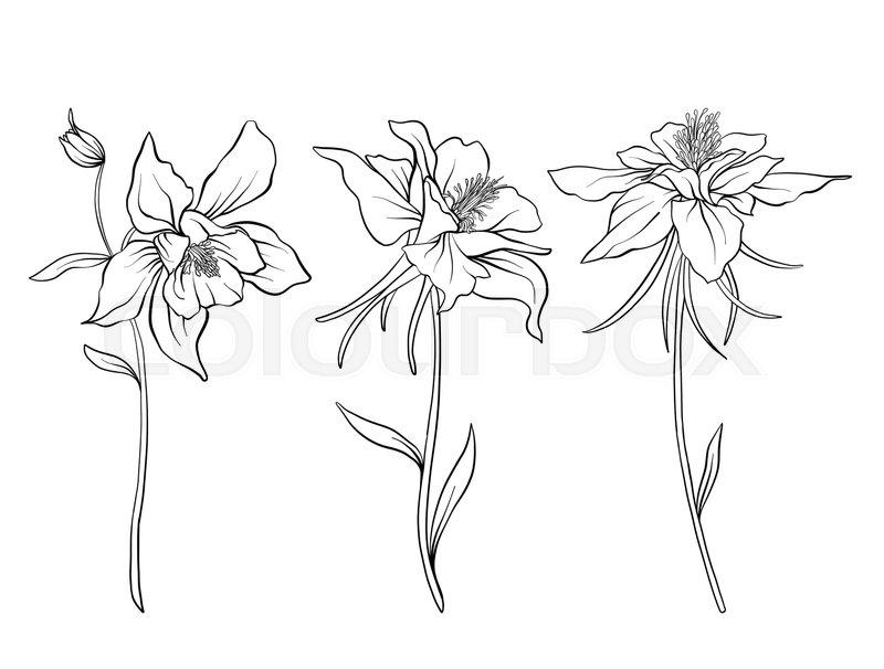 Columbine flowers. Set of outline