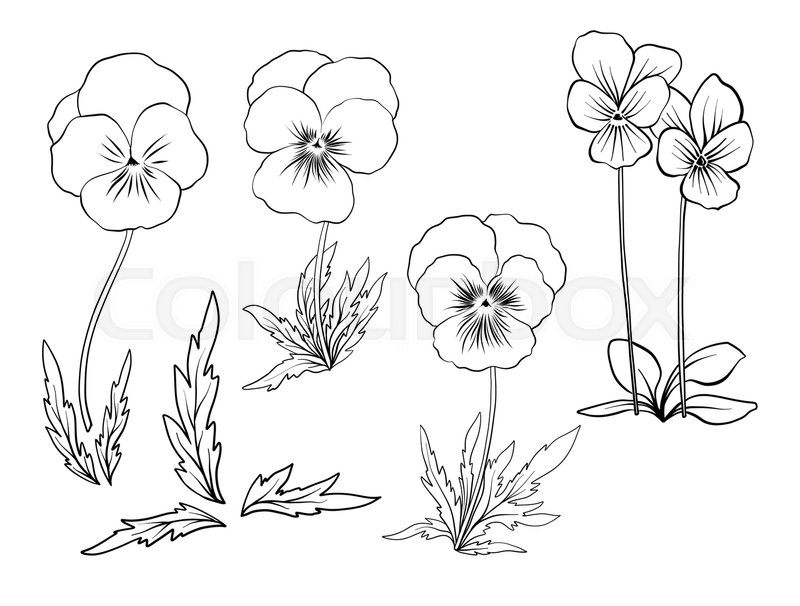 Violet Flowers Set Of Outline Stock Line Vector Illustration Hand Drawing Coloring Page For Book