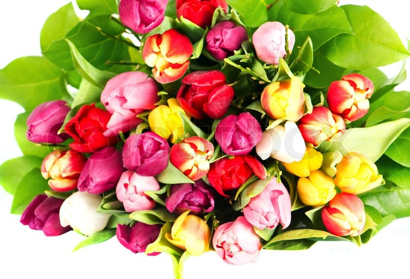 Colorful tulips bouquet fresh spring flowers stock photo colourbox mightylinksfo