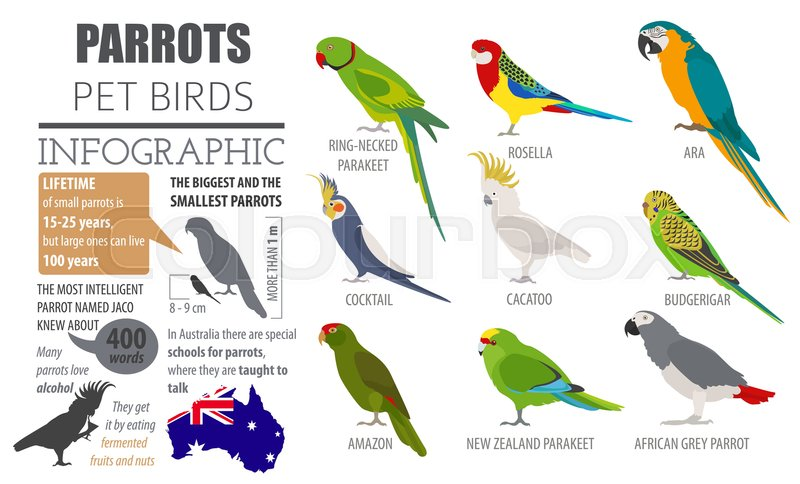 Parrot Breeds Icon Set Flat Style Stock Vector Colourbox