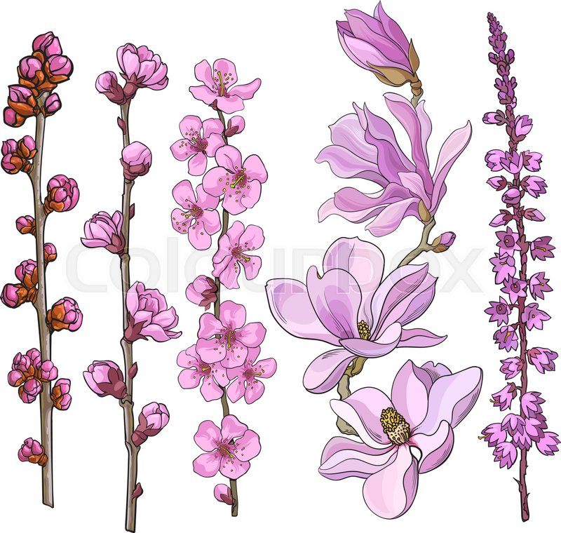 Set of hand drawn pink flowers magnolia apple and cherry blossom set of hand drawn pink flowers magnolia apple and cherry blossom heather sketch vector illustration isolated on white background mightylinksfo