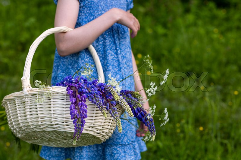 The girl is carrying a basket of flowers, lupines, stock photo