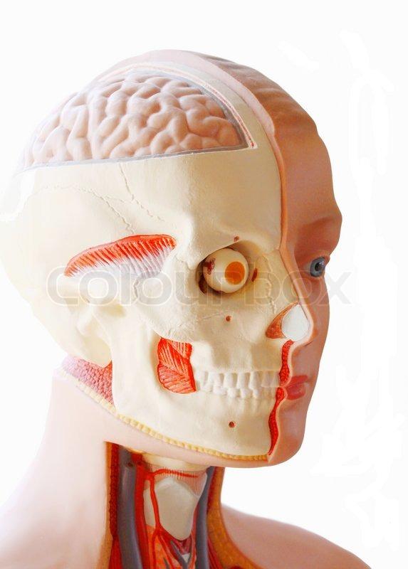 Kopf , Schädel, Gehirn, Auge, Hilfe , schneiden Gesundheitswesen ...