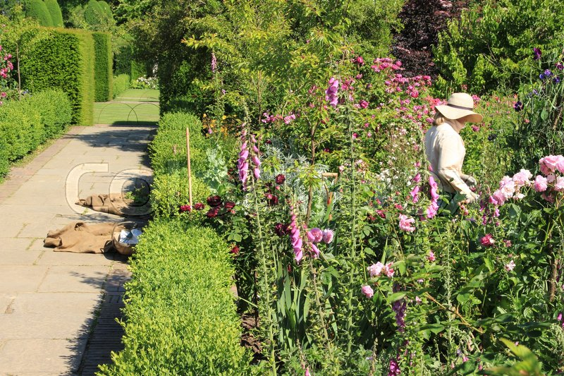 The gardener is working in one of the blooming gardens on Sissinghurst Castle in England on a sunny day in the beautiful summer, stock photo