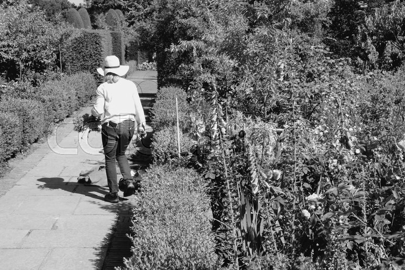 The gardener is working in one of the blooming gardens on Sissinghurst Castle in England on a sunny day in the beautiful summer in black and white, stock photo