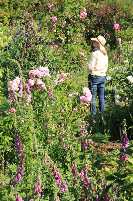 The gardener has a break and enjoys one of the blooming gardens on Sissinghurst Castle in England in the beautiful summer, stock photo