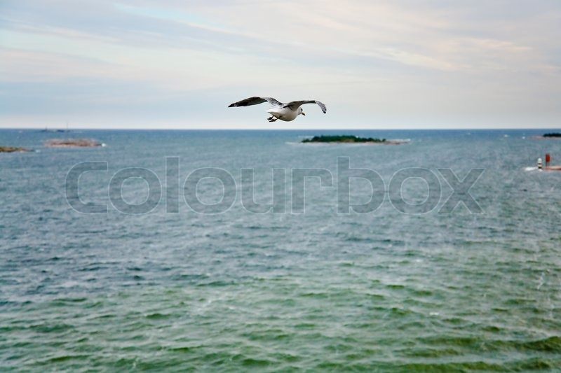 Single sea gall flying to island in Baltic Sea at evening glow, stock photo