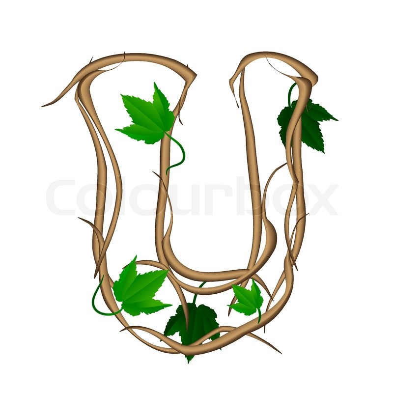 Evergreen Shrub  Letters