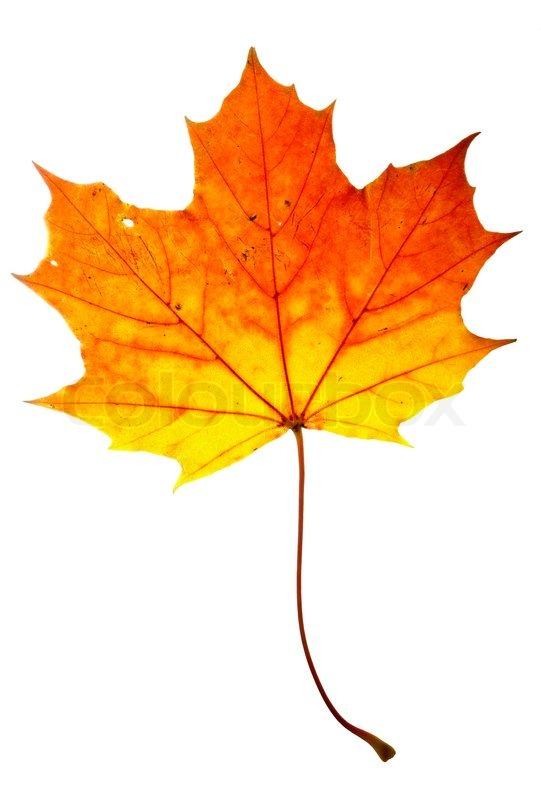Orange Maple Property Management
