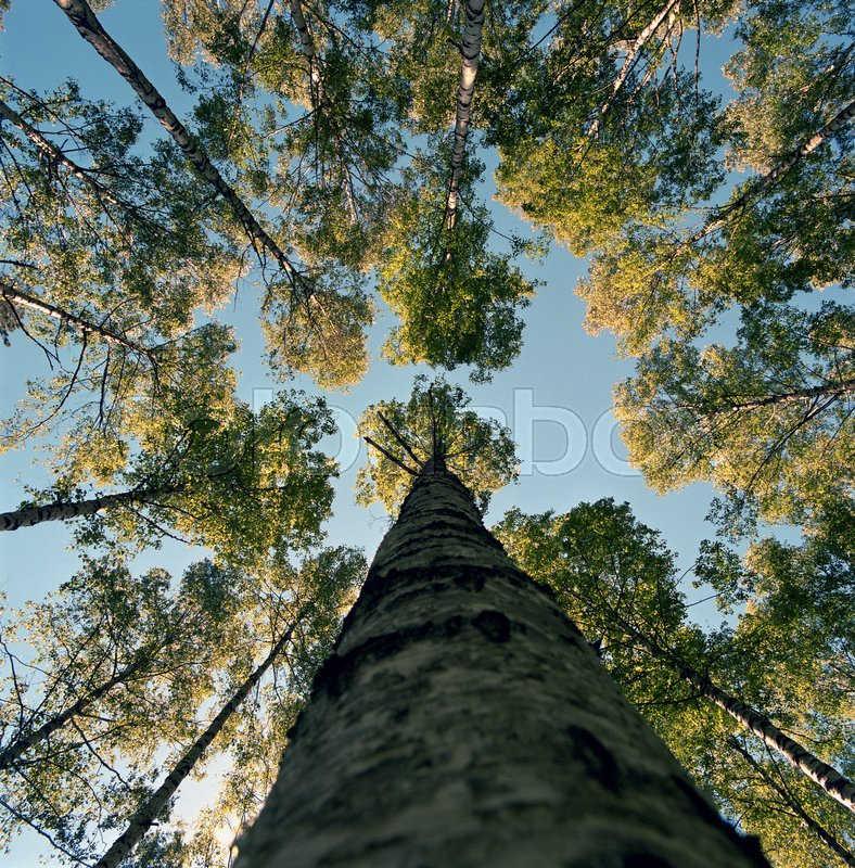 Low angle view of tall tree, stock photo