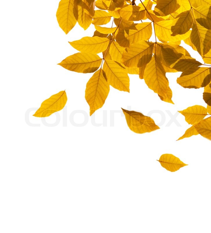 Autumn Leaves Border Isolated On A White Background