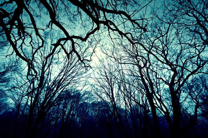 dark winter forest background nature stock photo colourbox