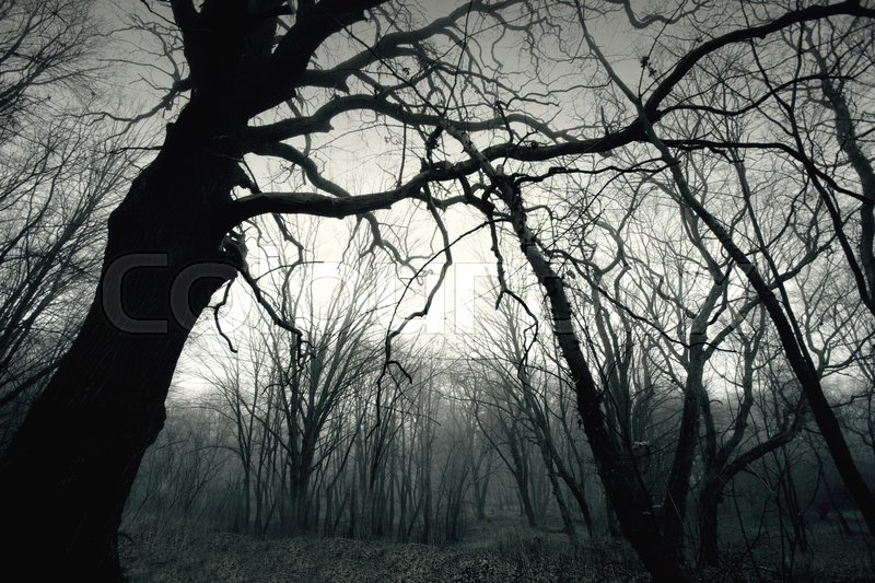 dead dark winter tree in the forest nature in woods black and