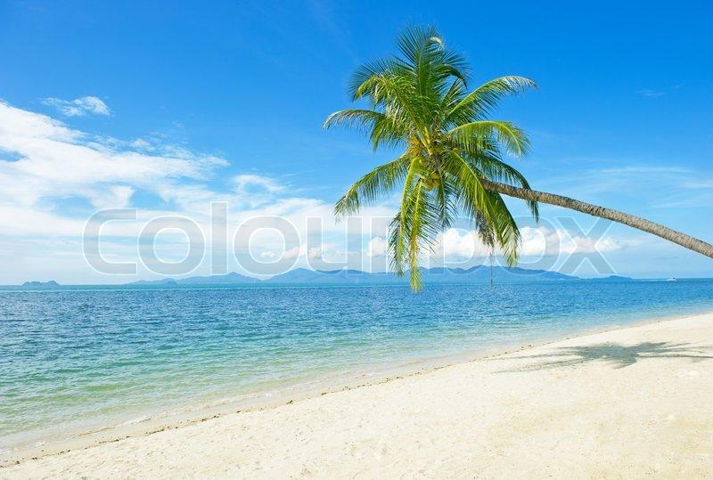 Beautiful Beach With Palm Tree And Blue Sky
