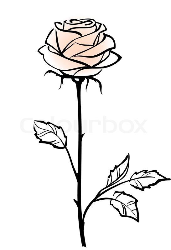 Stock vektor af flot enkelt lyserød rose blomst isoleret på
