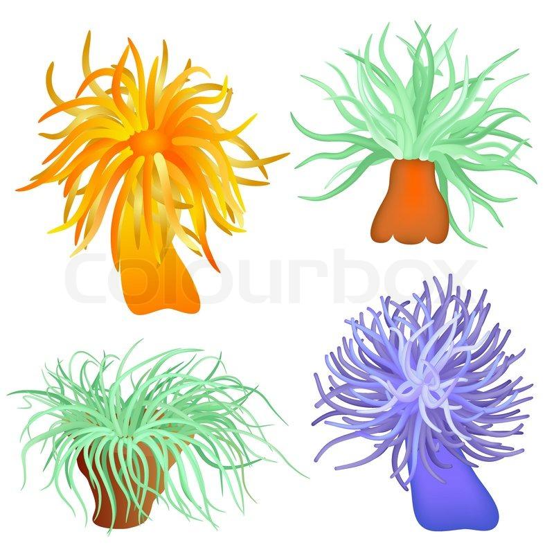Sea anemone - sea flowers - vector | Stock Vector | Colourbox