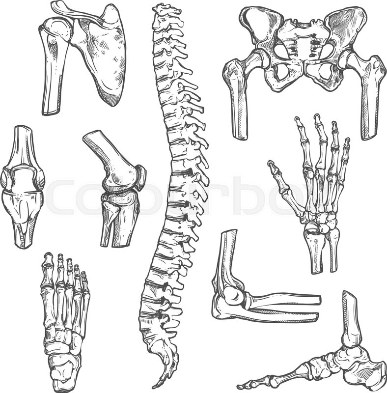 Human Joints And Body Parts Bones Sketch Icons Vector Isolated Set