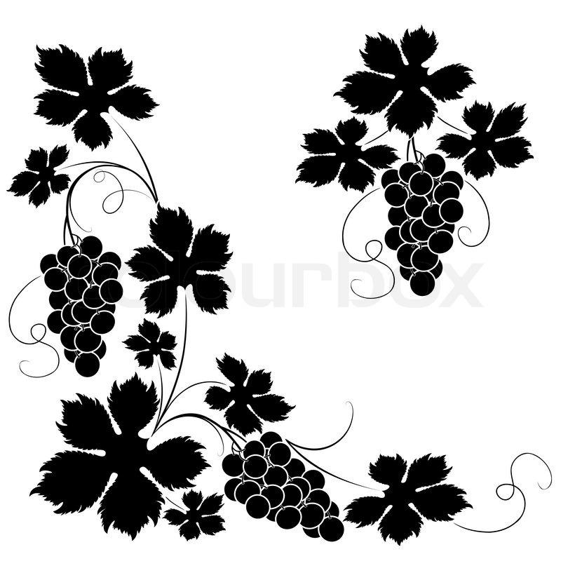 Dekorative elemente aus der rebe auf vektorgrafik colourbox - Feuille de vigne dessin ...