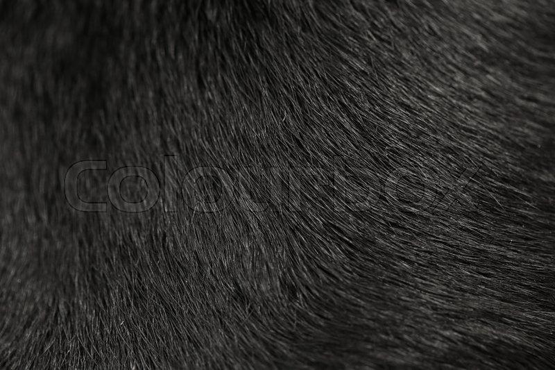 Black Labrador Dog Fur Background Stock Photo Colourbox