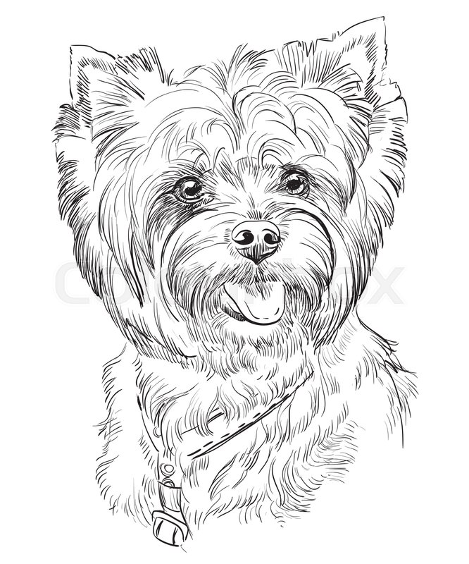 Vector Portrait Of Yorkshire Terrier In Black Color Hand Drawing
