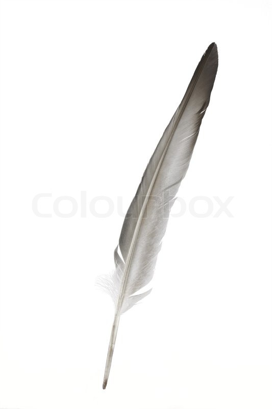 Aria Yamasaki, The Blooming Rose 2722009-605932-dove-feather-isolated-on-white