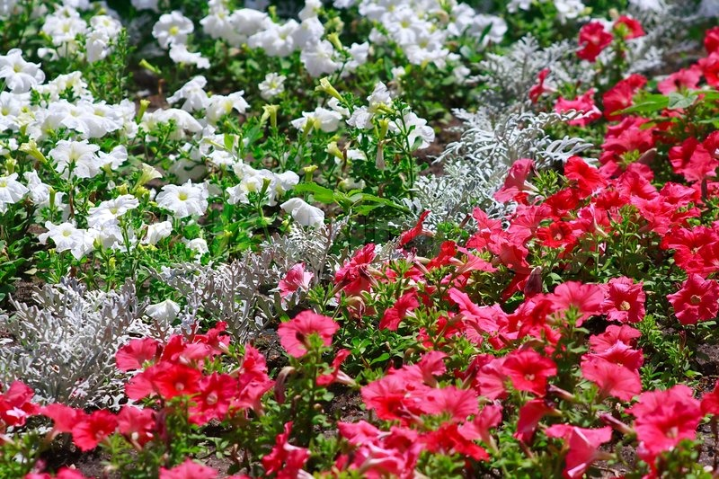 The garden bed with pink and white flowers stock photo colourbox mightylinksfo