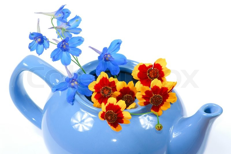 the blue kettle with nice flowers  stock photo  colourbox, Natural flower