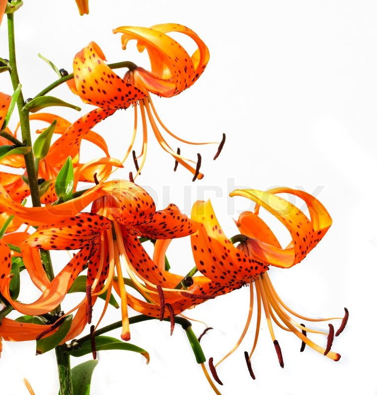 how to get day lilies to bloom all summer