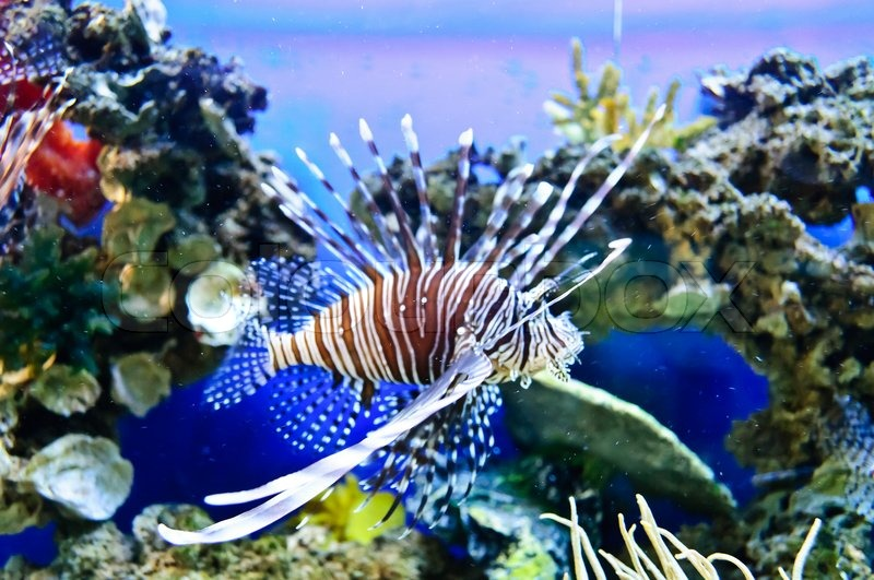 Marine Tropical Fish Colorful Exotic Little Fish Stock