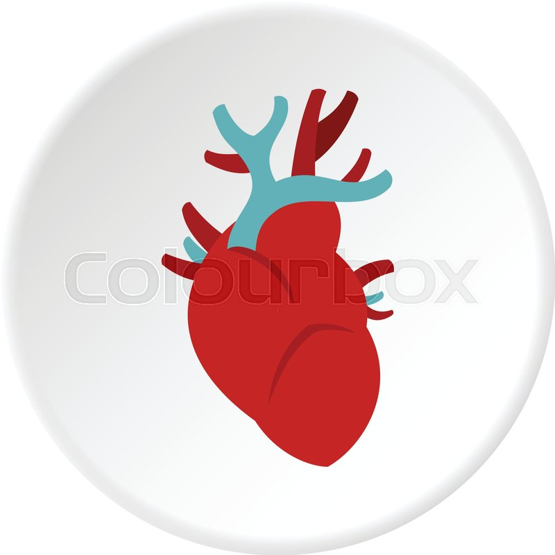 Herz, physiologie, anatomie | Vektorgrafik | Colourbox