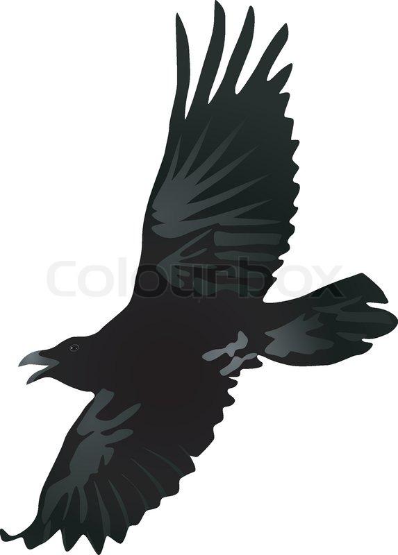Vector Zeichnen eines fliegenden Krähe | Vektorgrafik | Colourbox