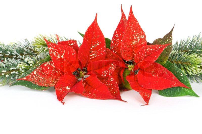 weihnachtsstern rot weihnachten blume festliche dekoration grenze stockfoto colourbox. Black Bedroom Furniture Sets. Home Design Ideas
