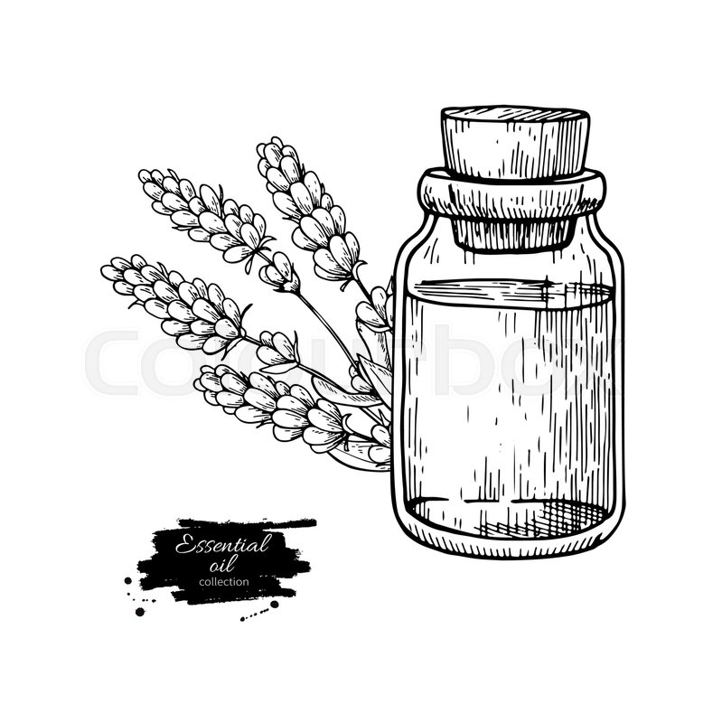 Lavander essential oil bottle and bunch of flowers hand drawn vector lavander essential oil bottle and bunch of flowers hand drawn vector illustration isolated drawing for aromatherapy treatment alternative medicine mightylinksfo