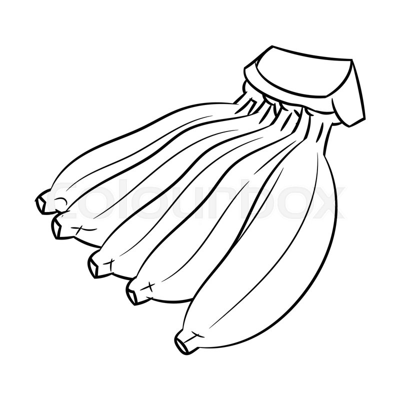 Hand Drawn Sketch Of Cultivated Banana Isolated Black And White Cartoon Vector Illustration For Coloring Book