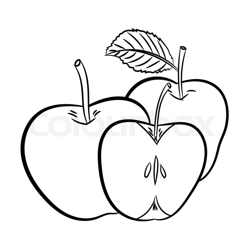 Line Drawing Apple : Hand drawn sketch of apples isolated black and white