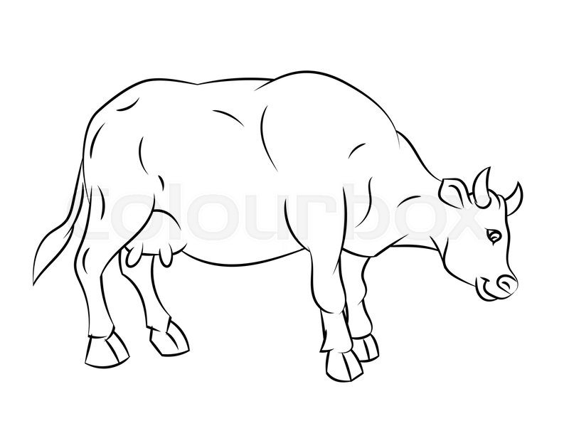 Hand Drawn Sketch Of Cow Isolated Black And White Cartoon Vector Illustration For Coloring Book